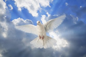 A dove in the sky